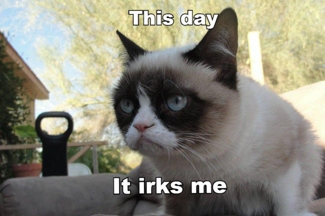 Tard Grumpy Cat jour bosse
