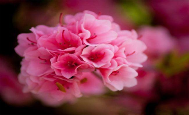 Fotografía - 20 La plupart des fleurs romantique pour les filles