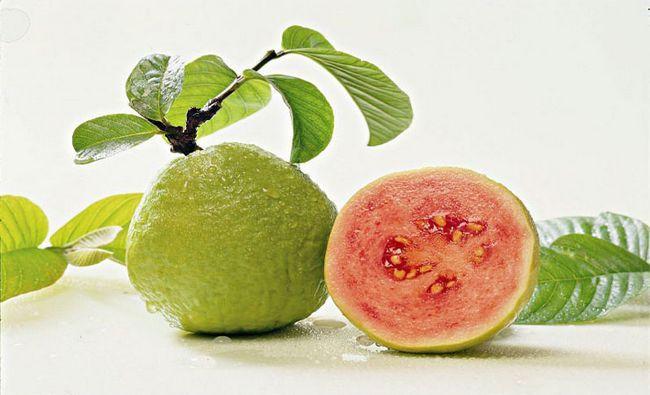 Guava-Appetite