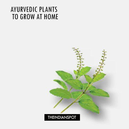 Fotografía - Plantes ayurvédiques à grandir à la maison