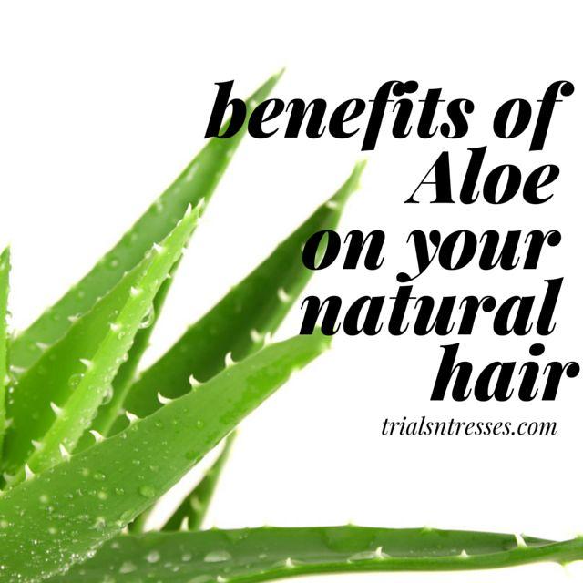 Fotografía - Bénéfices de l'aloe sur les cheveux naturels