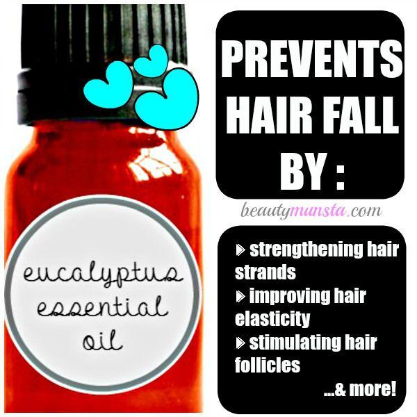 Fotografía - Huile essentielle d'eucalyptus pour la perte de cheveux | Pourquoi ça marche