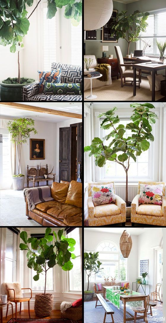 Fotografía - {} Dans la maison Maison de l'arbre de vie