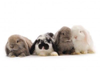 Sautant lapin applaudit la décision de l'Europe pour l'interdiction des tests sur les animaux des produits cosmétiques