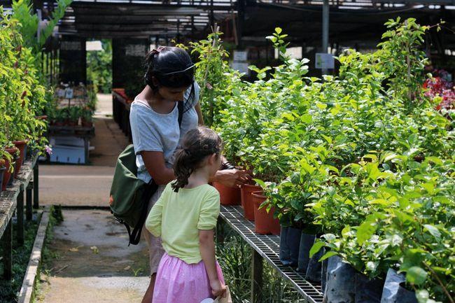 Fotografía - Apprenez // Comment choisir des plantes à la pépinière
