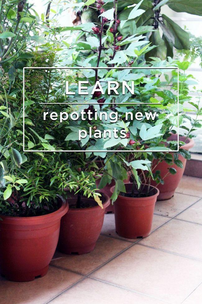 Fotografía - Apprenez // Comment rempoter vos plantes