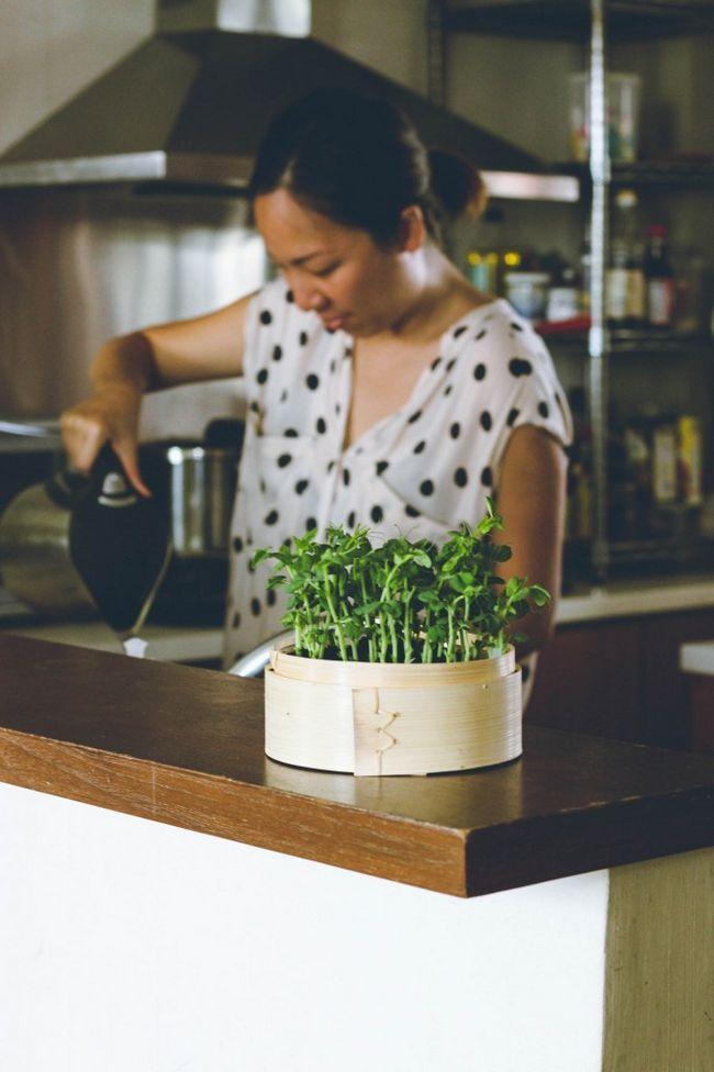 Fotografía - Apprenez // Comment Sprout Microgreens à la maison