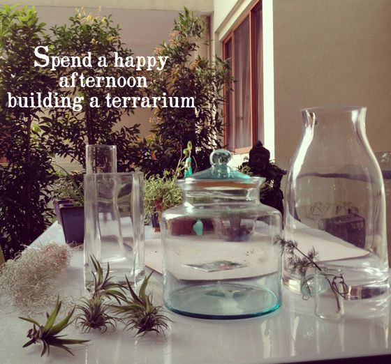 Fotografía - Make It - Terrarium