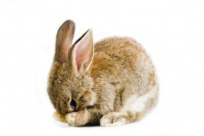 Fotografía - Mythes à propos de l'expérimentation animale
