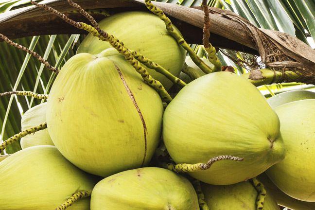Les nombreuses merveilles de l'huile de coco