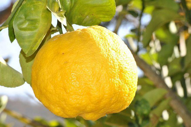 Saviez-vous: huile essentielle de citron éclaire aussi la peau et aide à lutter contre l'acné!