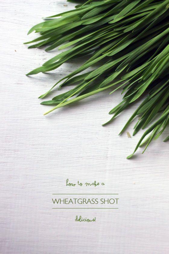Fotografía - Tirs délicieux d'herbe de blé. Oui. Je suis sérieux!